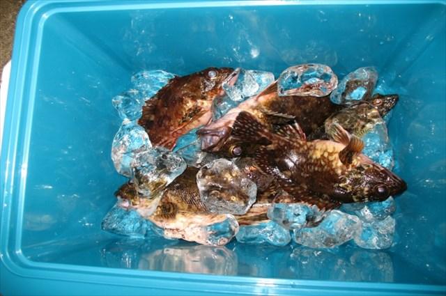 広島で遊漁船をお探しの際は【倖矢丸】をどうぞご利用ください。当漁船は、予約制となっており、定員は1名から8名様でとなります。ご家族やご友人と一緒に釣りを楽しめます。遊漁船で魚釣りを楽しんだ後は、美味しく調理して召し上がりたいものです。釣った魚の鮮度を保つ為に、氷などで魚を締めるとよいでしょう。その他、ご不明な点や出港情報はお気軽にお問い合せください。ご予約はお電話にて受け付けております。釣った魚を保管する様子の画像